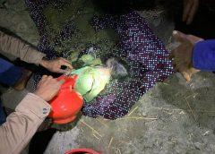 নিখোঁজের ৪০ ঘণ্টা পর সাতক্ষীরার নবজাতক শিশু সোহানের মরদেহ উদ্ধার || বাবা-মা গ্রেপ্তার